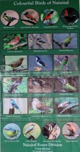 Nainital Birds