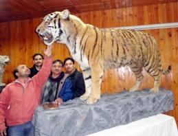 रॉयल बंगाल टाइगर को छूने का गुमान