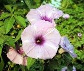 वन फूल