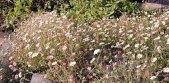 फूल खिले हैं गुलशन-गुलशन
