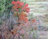 रंगीन पेड़-प्रकृति की खूबसूरती