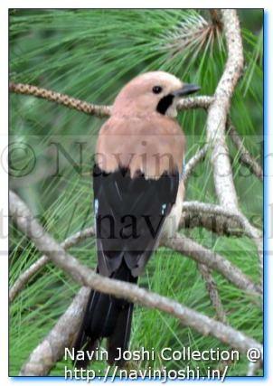 Name the Bird
