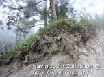 Rajbhawan Land Slide (8)